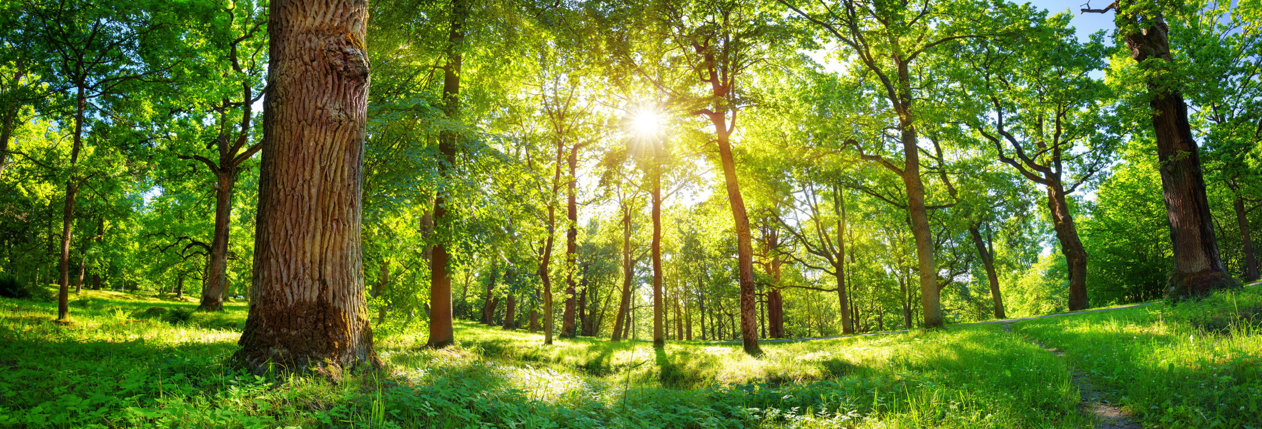 how nature can improve your mental health